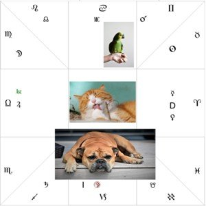 Astrology of animals s