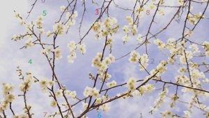 Plum Blossom Numerology s